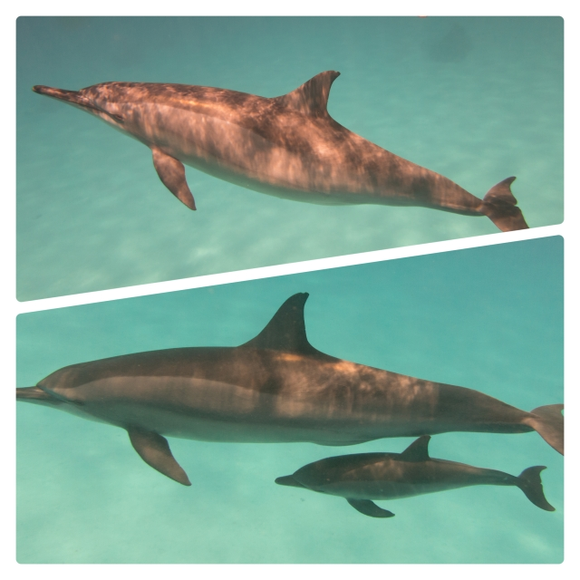 2013. Incubo was seen pregnant in early June and with her second baby in July. (Photographers:Maddalena Fumagalli/Amina Cesario)